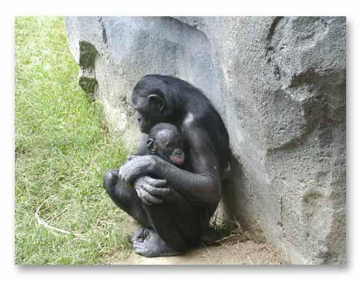 bonobo4.jpg