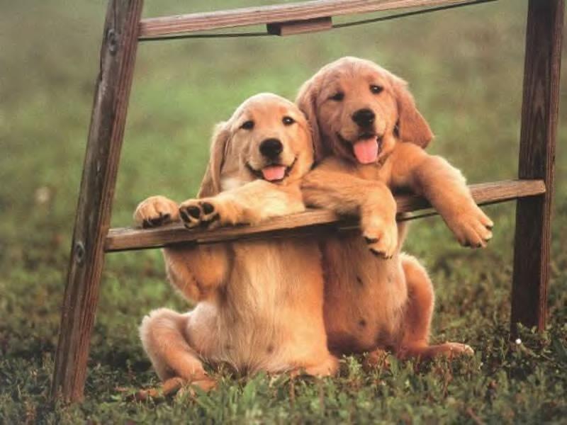 chiens64037521599.jpg