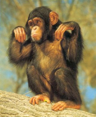 chimpanze2.jpg