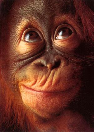 orangoutanjeune1.jpg