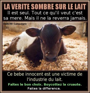 darkdairyfrench